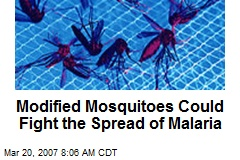 Modified Mosquitoes Could Fight the Spread of Malaria