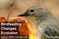 Birdfeeding Changes Evolution