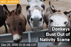 Donkeys Bust Out of Nativity Scene