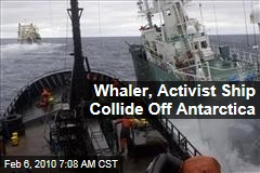 Whaler, Activist Ship Collide Off Antarctica
