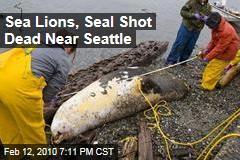 Sea Lions, Seal Shot Dead Near Seattle