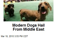 Modern Dogs Hail From Middle East