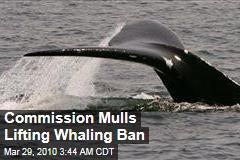 Commission Mulls Lifting Whaling Ban