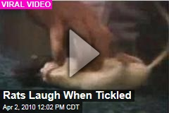 Rats Laugh When Tickled