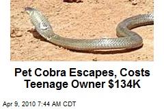 Pet Cobra Escapes, Costs Teenage Owner $134K