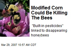 Modified Corn Could Be Killing The Bees