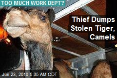 Thief Dumps Stolen Tiger, Camels