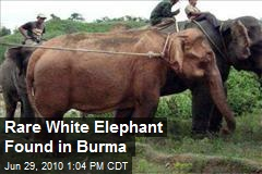 Rare White Elephant Found in Burma
