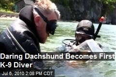 Daring Dachshund - becomes first K-9 Scuba Diver
