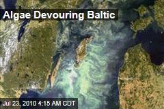Algae Devouring Baltic