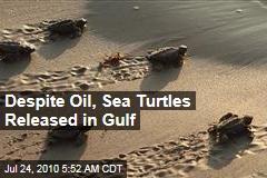 Despite Oil, Sea Turtles Released in Gulf