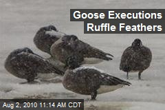 Goose Executions Ruffle Feathers