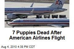 7 Puppies Dead After American Airlines Flight