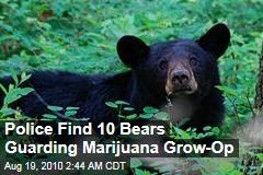 Police Find 10 Bears Guarding Marijuana Grow-Op