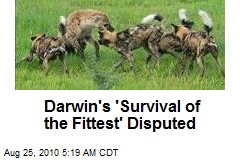 Darwin's 'Survival of the Fittest' Disputed