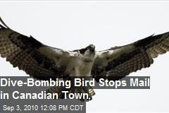 Dive Bombing Bird Stops Mail