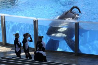 SeaWorld: Blackfish Whale Has Potentially Deadly Illness