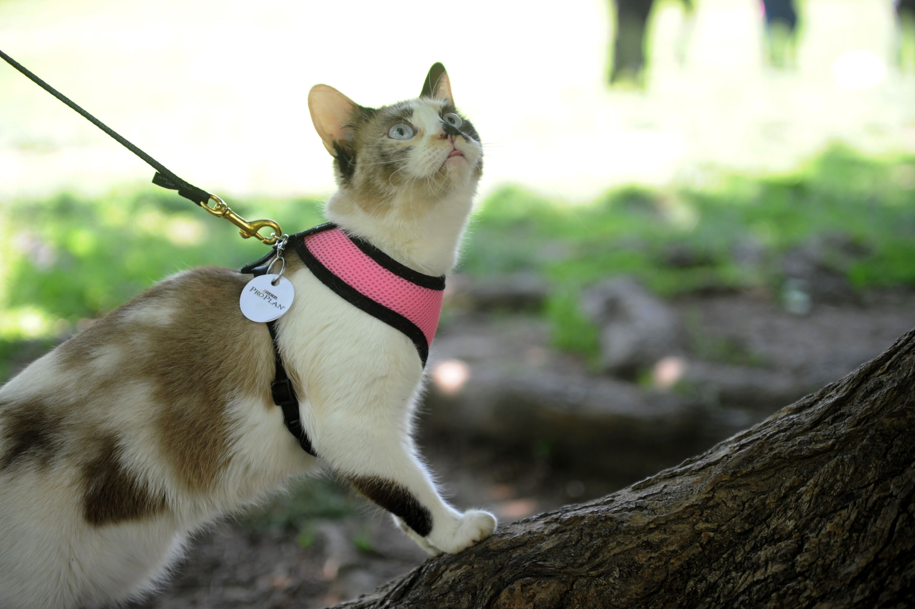 City May Start Requiring Leashes For Cats