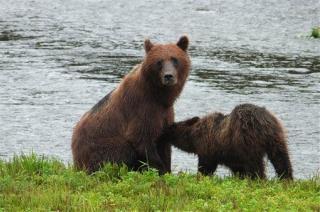 Bears Kill Worker at Remote Alaska Mine
