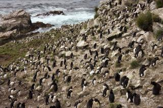 For Sale: One of the Falkland Islands
