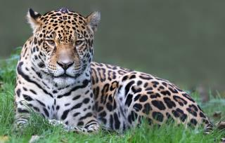 Woman Injured by Jaguar at Zoo Has Her Say