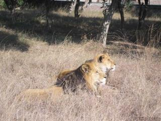 Teen's Body Found in Zoo's Lion Enclosure