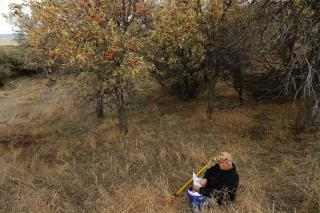 Apple Hunters Find 10 'Extinct' Varieties