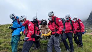 16 Rescuers Carry 'Massive' St. Bernard Down Mountain