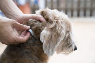 Watchdog Raises Alarm About Popular Flea Collar