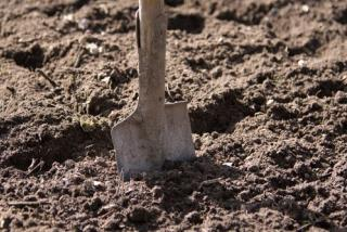 Man Trying to Bury Cat Finds Something Else in Yard