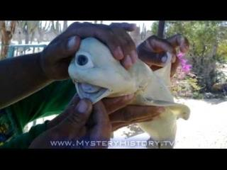 Fisherman Nabs Cyclops Shark