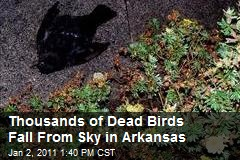 Thousand of Dead Birds Fall From Sky in Arkansas