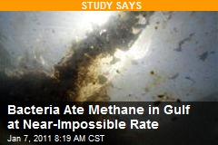 Bacteria Ate Methane in Gulf at Near-Impossible Rate
