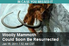 Woolly Mammoth Could Soon Be Resurrected