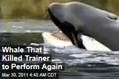 killer whale attack – News Stories About killer whale attack - Page