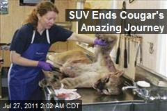 SUV Ends Cougar's Amazing Journey