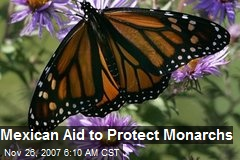 Mexican Aid to Protect Monarchs