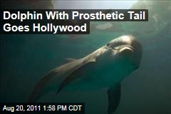 Winter the Dolphin Stars in Upcoming Movie, Dolphin Tale, With Morgan Freeman