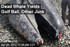 Dead Whale Yields Golf Ball, Other Junk