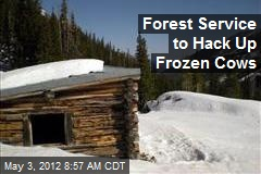 Forest Service to Hack Up Frozen Cows