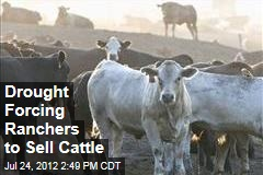 Drought Forcing Ranchers to Sell Cattle