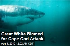 Great White Blamed for Cape Cod Attack