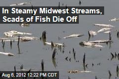 In Steamy Midwest Streams, Scads of Fish Die Off