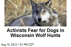 Activists Fear for Dogs in Wisconsin Wolf Hunts