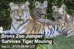Bronx Zoo Jumper Survives Tiger Mauling