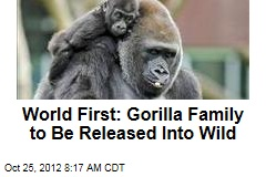 World First: Gorilla Family to Be Released Into Wild