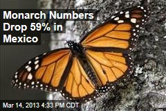 Monarch Numbers Drop 59% in Mexico