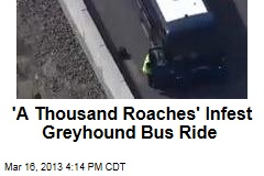 'A Thousand Roaches' Infest Greyhound Bus Ride