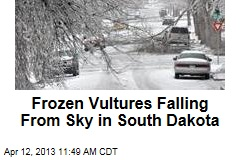 Frozen Vultures Falling From Sky in South Dakota