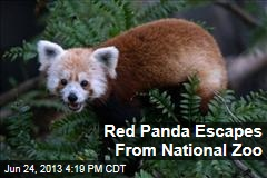 Red Panda Escapes From National Zoo